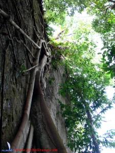 arbre-sur-rocher-de-granit