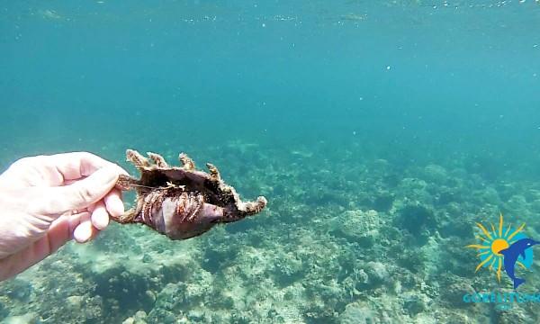 bernard-l'hermiteSnorkeling Belitung Indonésie