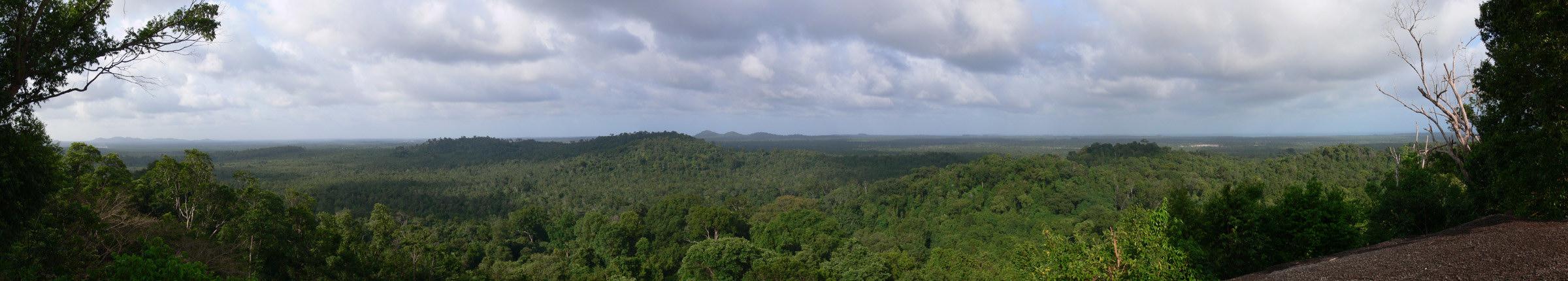 Découverte de la forêt de Bukit Peramun gobelitung indonesia
