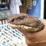serpent 7