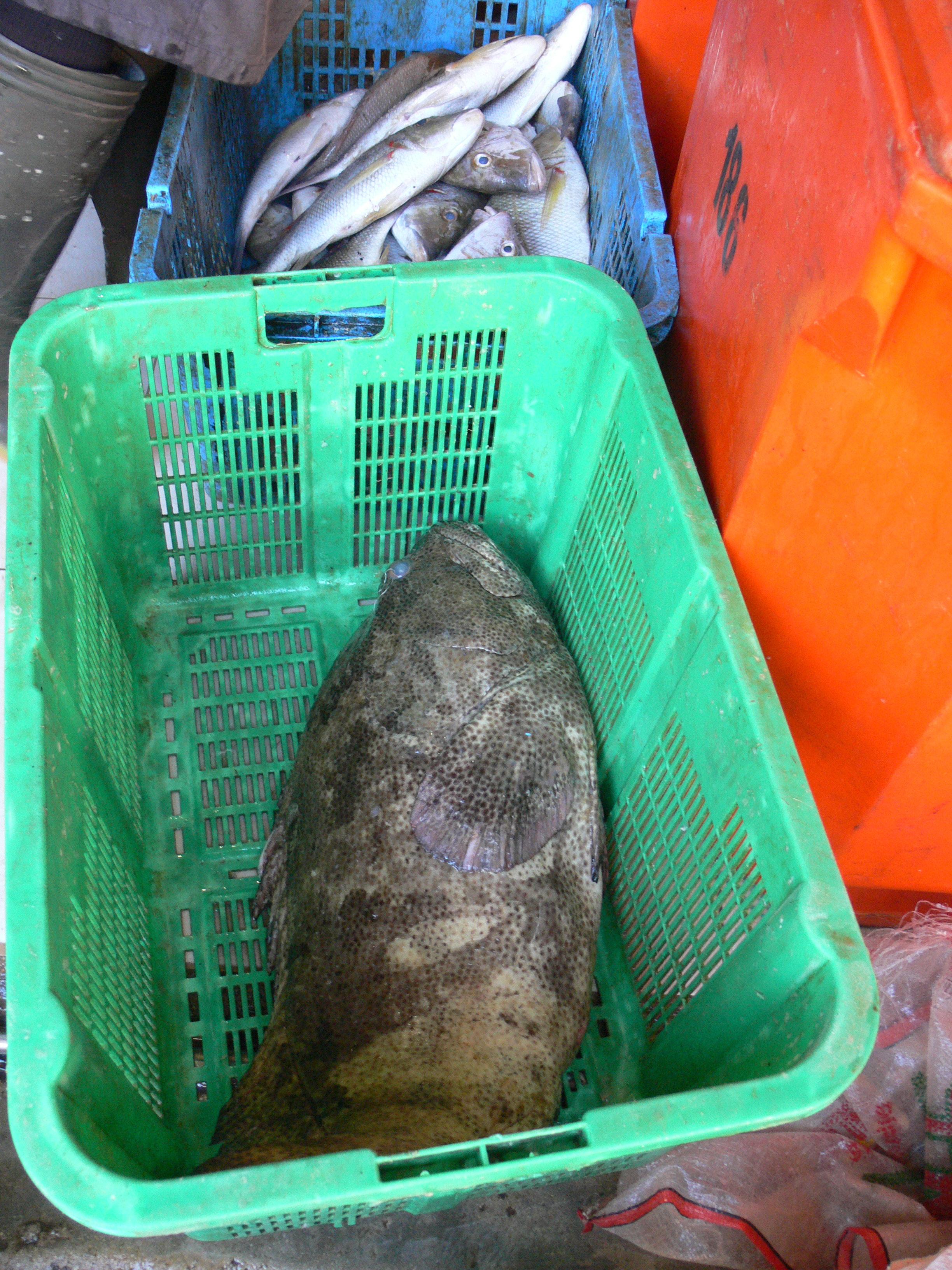 marché aux poissons Tanjung Pandan Belitung Indonésie