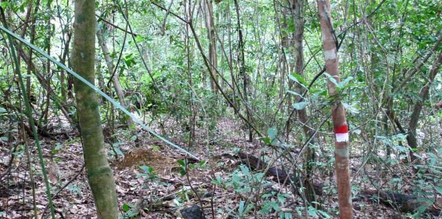 à-travers-bois Belitung Indonésie Go Belitung