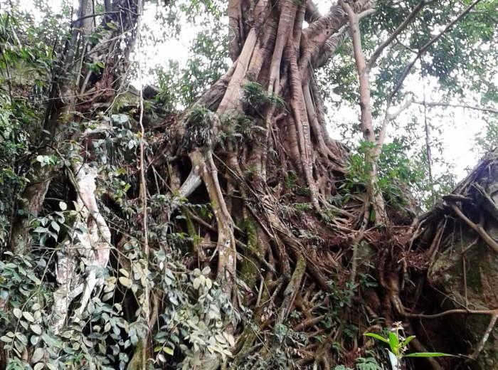 arbreGo Belitung
