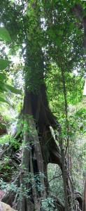 arbre-5