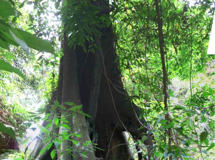 arbre Go Belitung