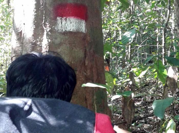 marquage Go Belitung