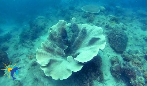 corail Snorkeling Belitung Indonésie