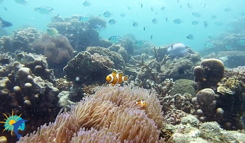nemo Snorkeling Belitung Indonésie