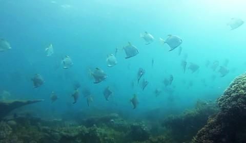 Snorkeling Belitung Indonésie ikan kerkitok Belitung Indonésie