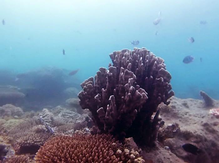Snorkeling Belitung Indonésie coraux Belitung Indonésie