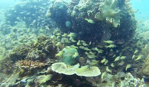 Snorkeling Belitung Indonésie neurcerie Belitung Indonésie