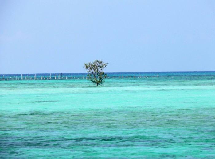 Paletuvier pulau Langer Belitung Indonésie