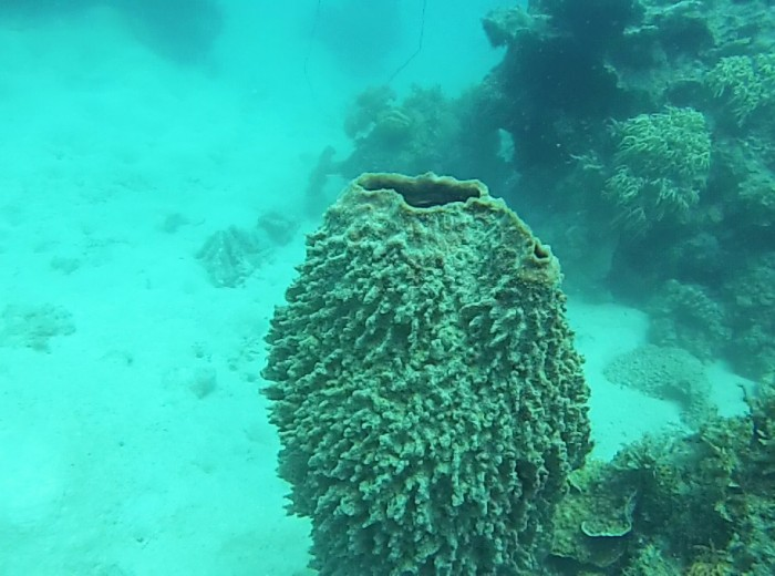 Eponge de mer Belitung Indonesie
