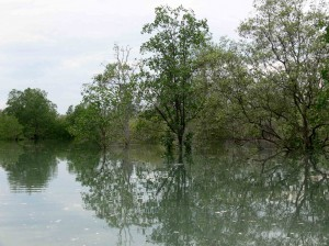 Futur-conservatoire-des-Crocodiles-de-Belitung-Indonésie