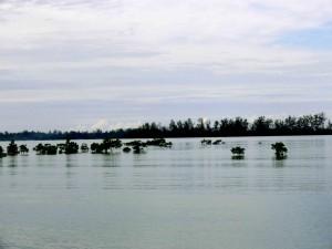 Mangrove-HKm-Seberang-Belitung-Indonésie