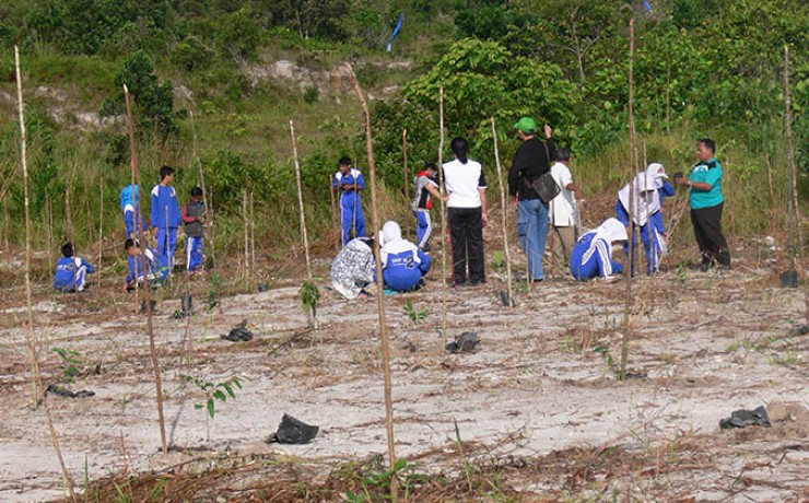 replantation d'arbres Go Belitung