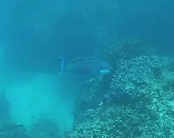 ikan  Belitung Indonésie Go Belitung